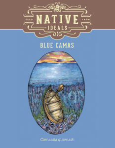 Blue_Camas