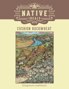 Cushion_Buckwheat