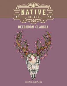 Deerhorn_Clarkia