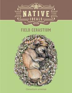 Field_Cerastium