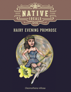 Hairy_Evening_Primrose