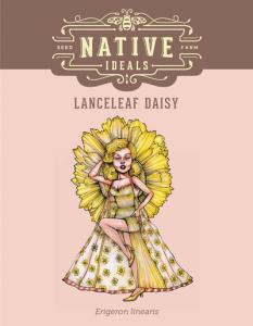 Lanceleaf_Daisy