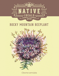 Rocky_Mountain_Beeplant