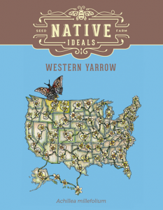 Western_Yarrow