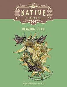Blazing_Star