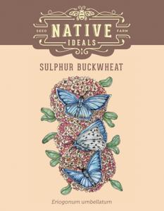 Sulphur_Buckwheat